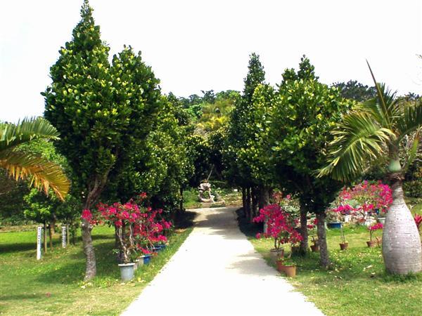 沖縄県内最大の人口熱帯植物園である宮古島市熱帯植物園
