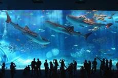 沖縄美ら海水族館「黒潮の海」大水槽画像