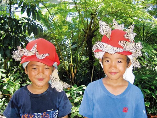 琉宮城蝶々園。本土では見られないオオゴマダラと遊ぶ