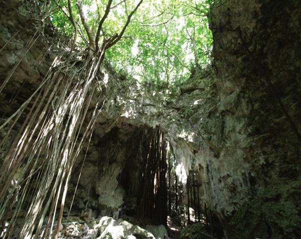 広がる森が神秘的なガンガラーの谷(