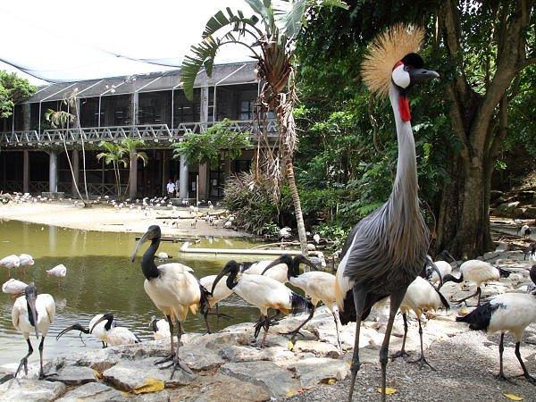 フラミンゴの湖の風景