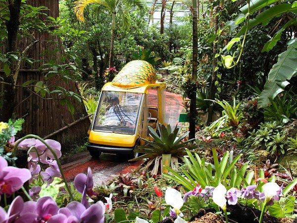 熱帯植物園を回るパイナップル号